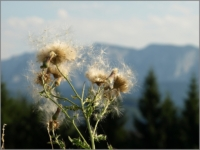 2013_08_Attersee_18