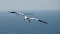 Vogelwelt 03