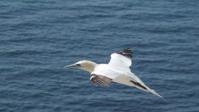 Vogelwelt 05