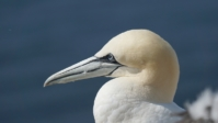 Vogelwelt 07
