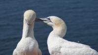 Vogelwelt 09