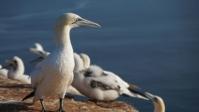 Vogelwelt 10