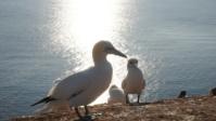 Vogelwelt 11