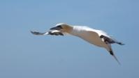 Vogelwelt 12