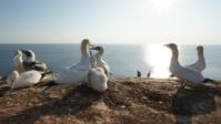 Vogelwelt 13