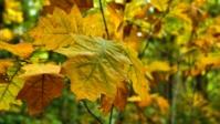 Herbst 14s