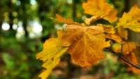Herbst 15s