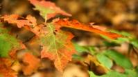Herbst 16s