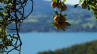 Attersee 10
